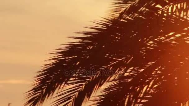 Listy palmy větev na pozadí večerní slunce. Listy palmy na západ slunce