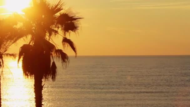 Panoramatický výhled na palmami na pozadí golden sunset v oceánu na tropické pláži