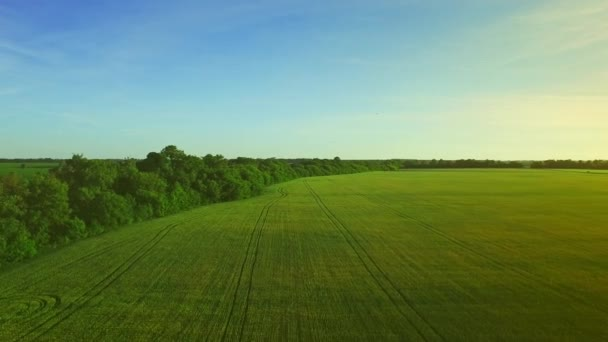 Krásné zelené pšenice pole krajina v letním dni. Zemědělský pozemek