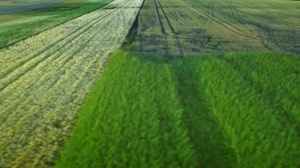 Sklizeň pole antény. Šířku pole pšenice. Odvětví chovu