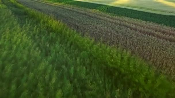 Beautiful landscape wheat field in agricultural land. Grain field aerial