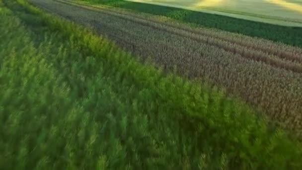 Krásná krajina pšeničné pole v zemědělské půdy. Obilí pole antény