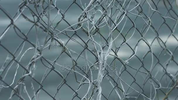 Weibliche Hand berühren Zaun Netz mit trockene Pflanzenstängel ...