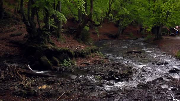 Malá horská řeka proudí temném lese. Krásná lesní krajina