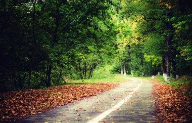 autumn forest. Fall llandscape