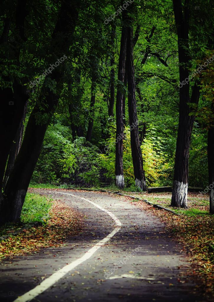 Road in the autumn forest.