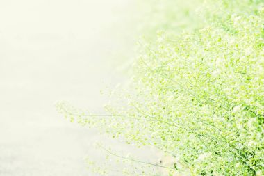 Partially blurred summer natural background