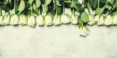 Fényképek Tavasszal a fehér rózsák, szürke háttér, felülnézet