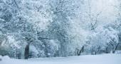 Havazás. Város utcája fákkal borított. Kék téli reggelen, hó táj