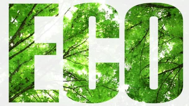 Příroda, ekologie, životní prostředí. Stromy a obloha