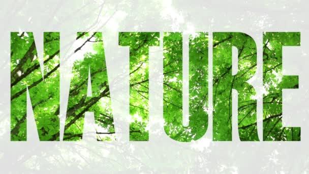 Příroda, ekologie, životní prostředí. Stromy a obloha.