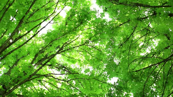 Trees, foliage, branches of trees. The sky and sunlight.