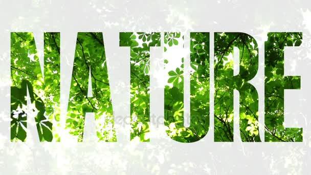 Ökológia, környezet, a természet. Zöld levelek, fák, napfény.