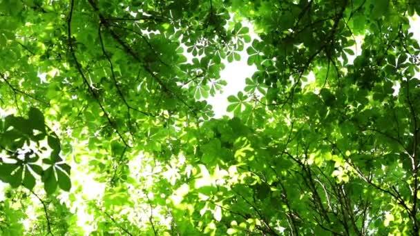 Nature Et Lumiere nature et l'arbre. la lumière du soleil fait son chemin à travers