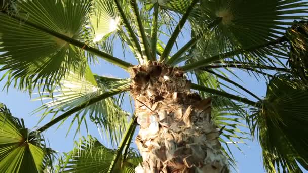 Green palm, tropical, summer. Leaves of palm trees against the blue sky.