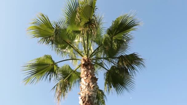 Leaves of palm trees against the blue sky. Tropical landscape, beautiful palm tree. Green palm, tropical, summer.