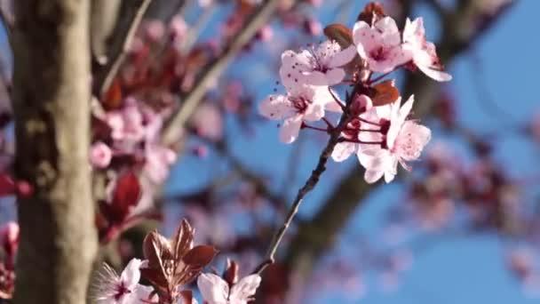 Krásné rozkvetlé jarní strom. Jaro a příroda