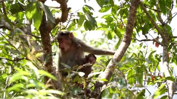 Female monkey with a baby on a tree branch. Family of monkeys