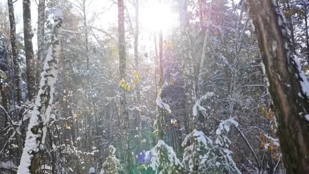 zimní Les za slunečného dne