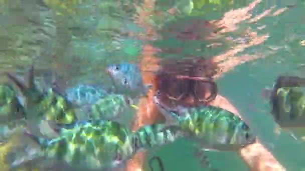 Ragazza fare il bagno nel mare con i pesci. Immersioni subacquee in maschere