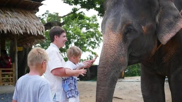 Rodina mazlit slona a ho krmit banány. Phangan, Thajsko