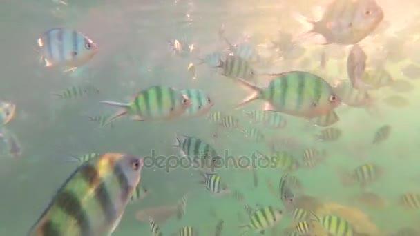 Un bambino si bagna nel mare con un pesce al sole. Immersioni subacquee nelle maschere. Isola tropicale. Luce solare attraverso lacqua