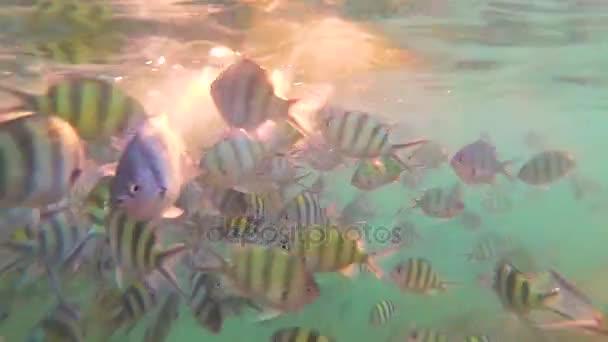 Un gran numero di pesci nuotata intorno alle barriere coralline. Immersioni subacquee nelle maschere. Isola tropicale. Luce solare attraverso lacqua