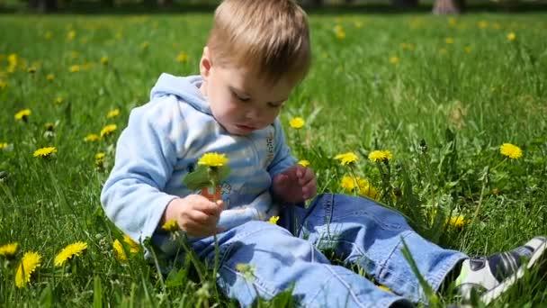 das glückliche Kind sitzt in einem Löwenzahnfeld. Spiel des Kindes im Freien