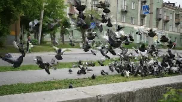 A flock of urban pigeons take off all together