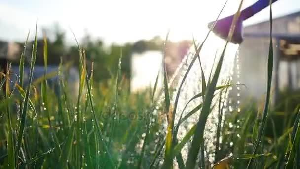 Zalévání zahrady rostliny od konev. Letní slunce. Zahrada, příroda