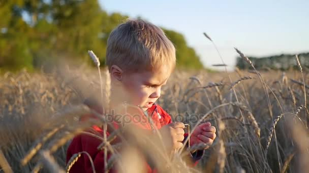 ein Kind steht auf einem Weizenfeld. der Junge hält eine Ähre Weizen