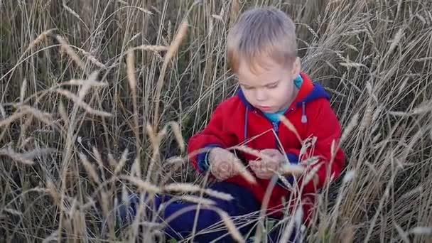 kleiner hübscher Junge auf einem Weizenfeld sitzend. Unterhaltung und Spaziergänge im Freien