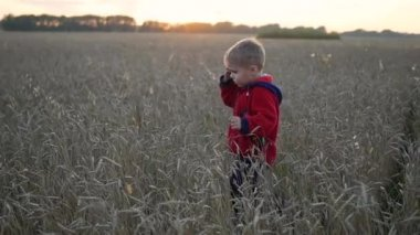 The boy runs along the wheat field, The time of sunset. Outdoor Sport