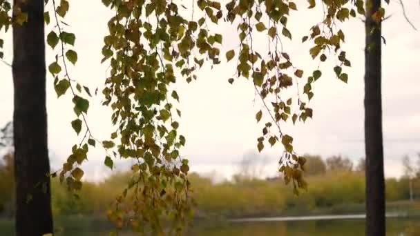 Podzimní strom na detailním větve stromu jezero, žlutá