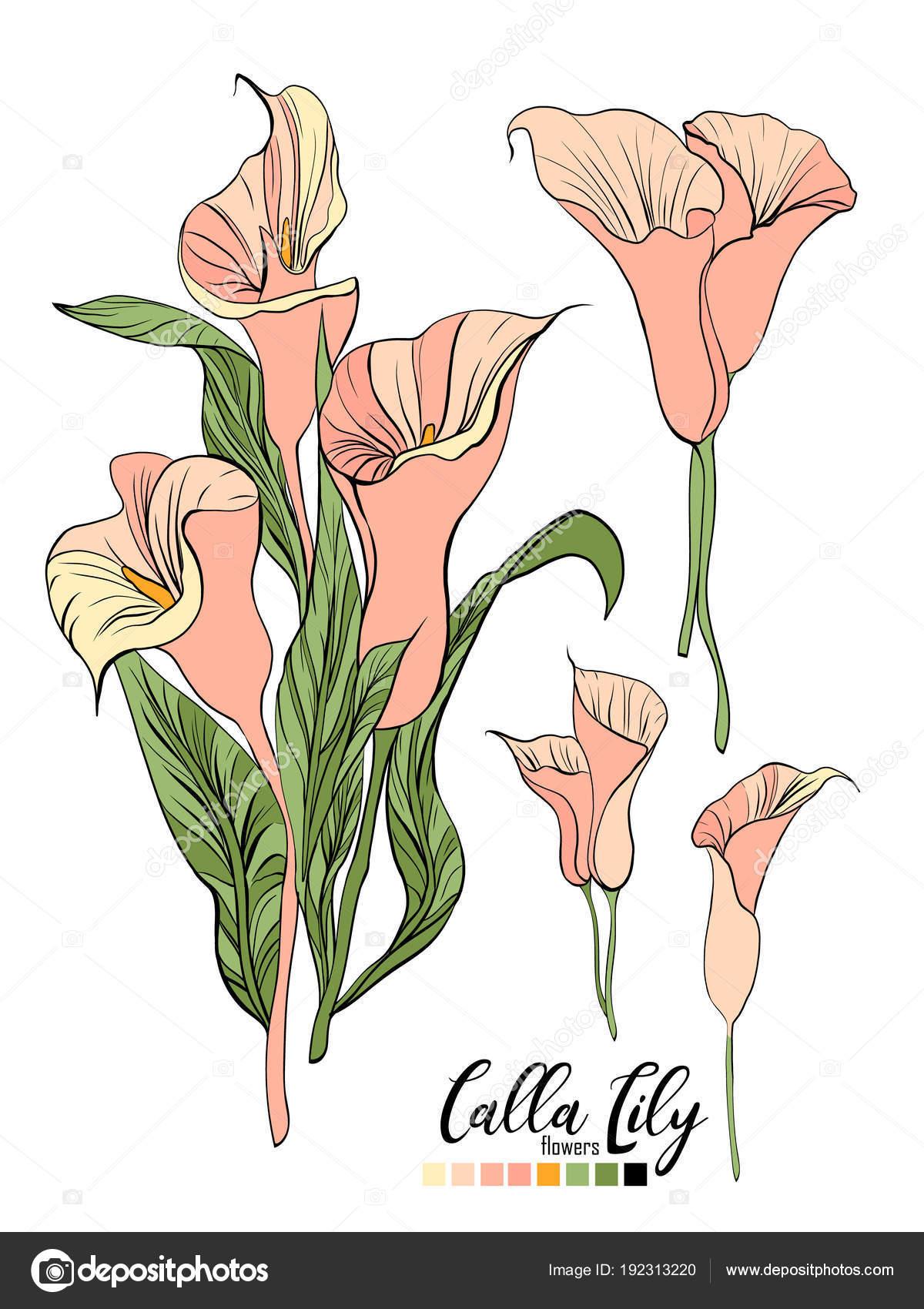 Vector Floral Bouquet Design Garden Pink Peach Creamy Powder Pale