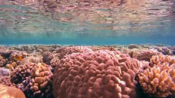 světlé, barevné, krásné mělký útes projeví z vodní hladiny, Rudé moře, Sharm El Sheikh, Sinajský poloostrov, Egypt