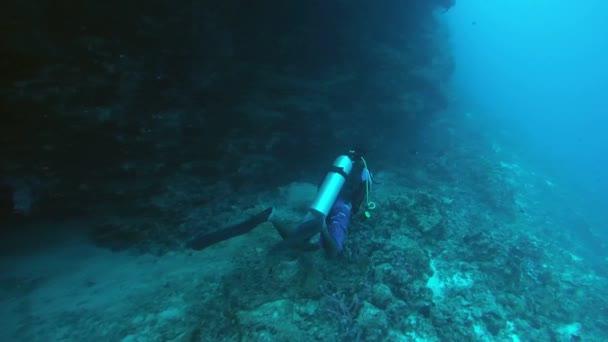 Male scuba diver swims next a coral reef, Indian Ocean, Maldives