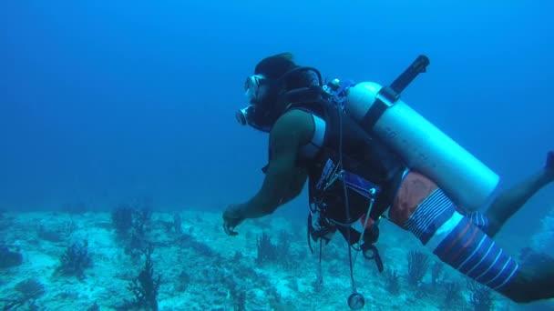 Oceano Indiano, Maldive - marzo 2017: Maschio scuba diver nuoto in acqua blu vicino alla barriera corallina