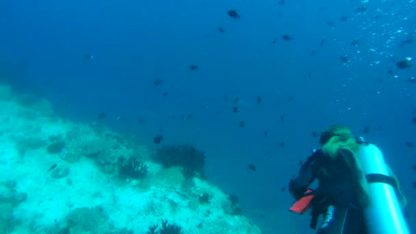 Female scuba diver looks at the gray reef shark (Carcharhinus amblyrhynchos) In blue water,