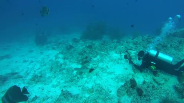 underwater cameraman shooting Whitetip reef shark (Triaenodon obesus) over coral reef in blue water,