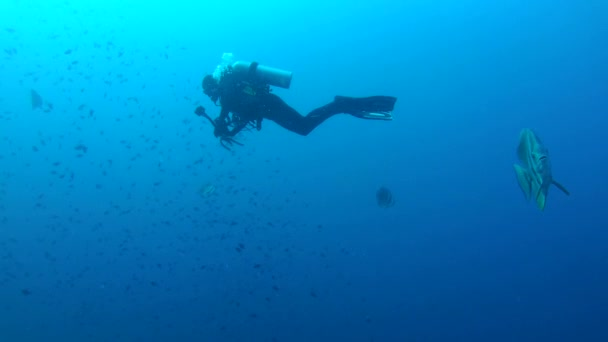 underwater cameraman shooting orbicular batfish (Platax orbicularis) in blue water,