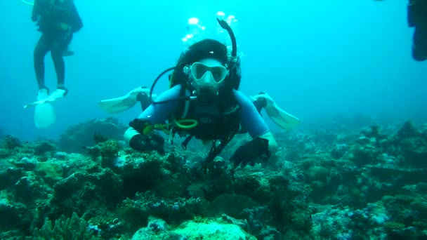 A female scuba diver looks at the fish and shows them, Indian Ocean, Maldives
