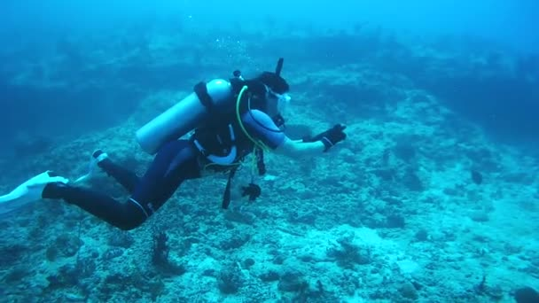 A female scuba diver takes pictures under the water, past it swims Remora (Echeneis naucrates), Indian Ocean, Maldivies