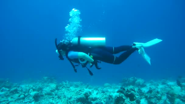Female scuba diver swims over coral reef, Indian Ocean, Maldives