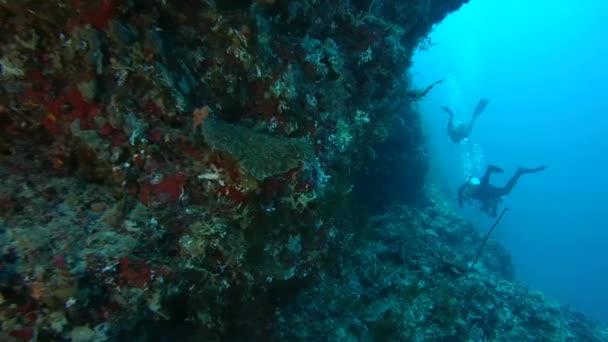 Scuba diver swims next a coral reef, Indian Ocean, Maldives
