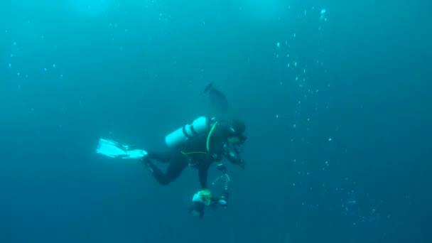 Scuba diver swims with Bignose Unicornfish - Naso vlamingii