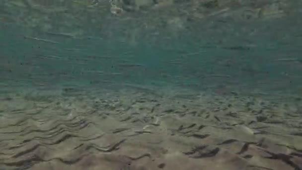 Eine Bank von jungen Hardyhead Silverside (Atherinomorus Lacunosus) schwimmt auf den Sandbänken, Marsa Alam, Rotes Meer, Ägypten, Abu Dabab