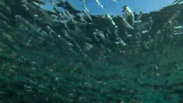 The massive school of small fish (Low-angle shot)