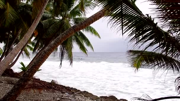 dlaň na tropické pláži