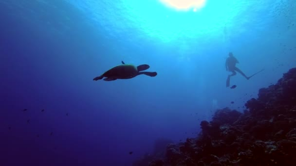 Scuba divers looking on Sea turtle swims swimming over coral reef - Indian Ocean, Maldives